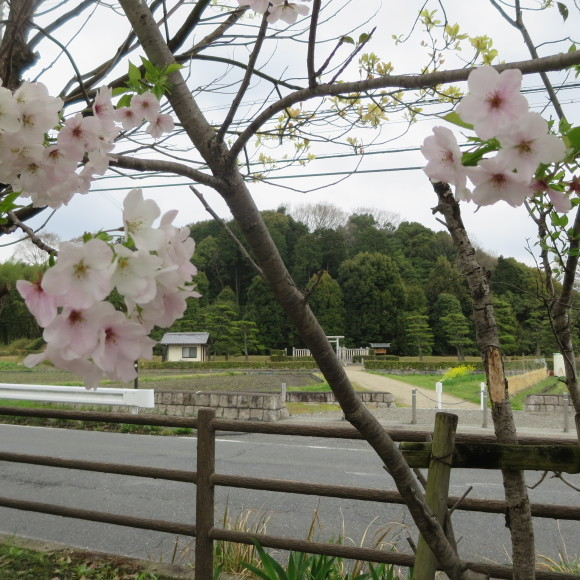 秋篠川の源流をたどる(歩いて)_c0001670_17061674.jpg