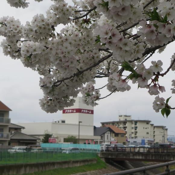 秋篠川の源流をたどる(歩いて)_c0001670_17062055.jpg