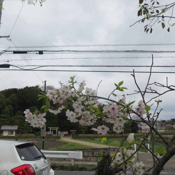 秋篠川の源流をたどる(歩いて)_c0001670_17280281.jpg
