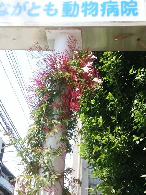 春ですね_e0367571_17321825.jpg