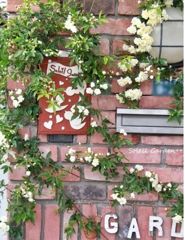 ◆ハナミズキとモッコウバラが咲きだしました_e0154682_22225742.jpg