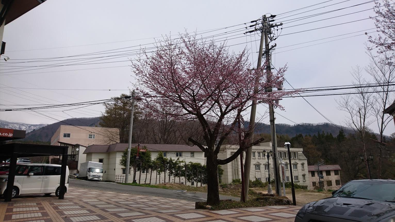 2017/04/29 とうとう開花_a0140584_09461402.jpg