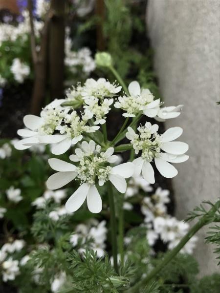 尼崎市 Aさまのお庭造園の様子です_e0232798_13440546.jpg