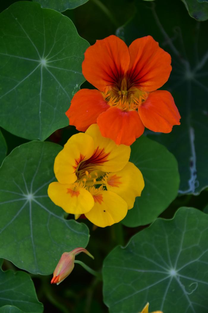 ヒナも花もあります(*^_^*)_c0049299_22294886.jpg