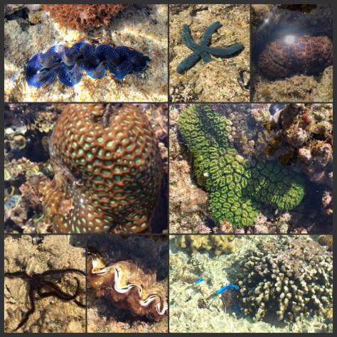 珊瑚に会いに行く日_c0176406_11050581.jpg