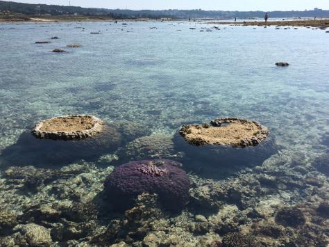 珊瑚に会いに行く日_c0176406_11050765.jpg