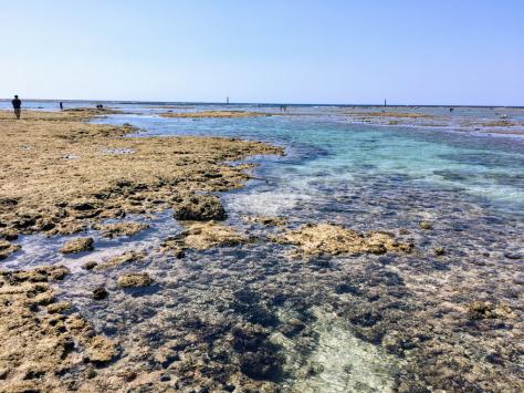 珊瑚に会いに行く日_c0176406_11071417.jpg