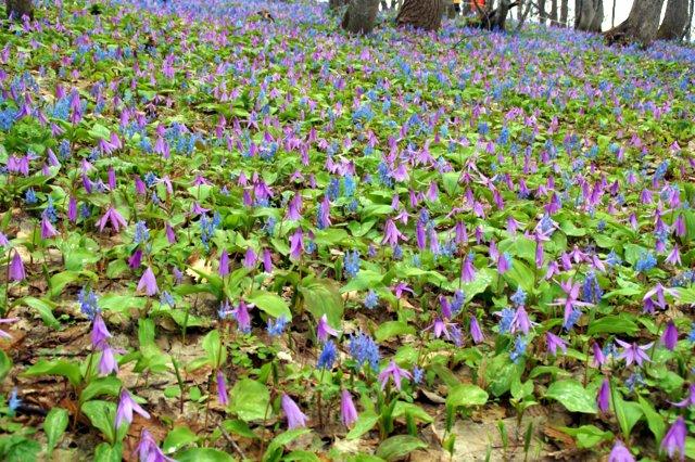 2017年4月28日(金) 春の花を探して(その7)旭川市~浦臼町_a0345007_20454243.jpg