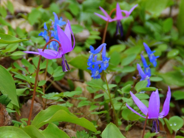 2017年4月28日(金) 春の花を探して(その7)旭川市~浦臼町_a0345007_20504289.jpg