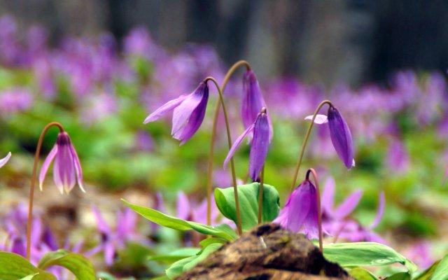 2017年4月28日(金) 春の花を探して(その7)旭川市~浦臼町_a0345007_2054684.jpg