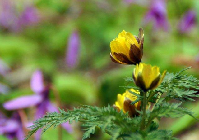 2017年4月28日(金) 春の花を探して(その7)旭川市~浦臼町_a0345007_20552633.jpg