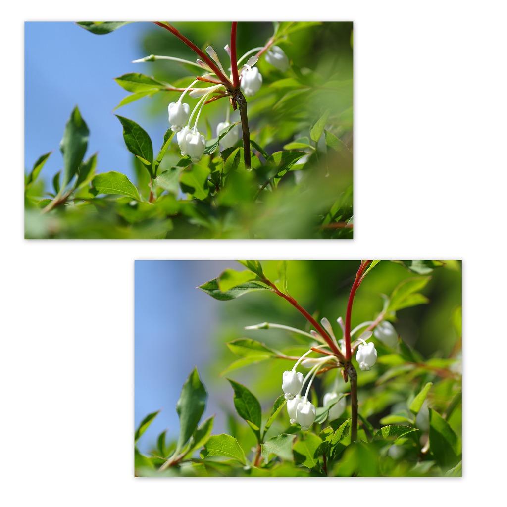 バラの季節なんだなぁ・・・_d0147812_554036.jpg