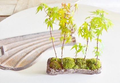 4、5月 盆栽ワークショップのご案内_d0263815_14445937.jpg