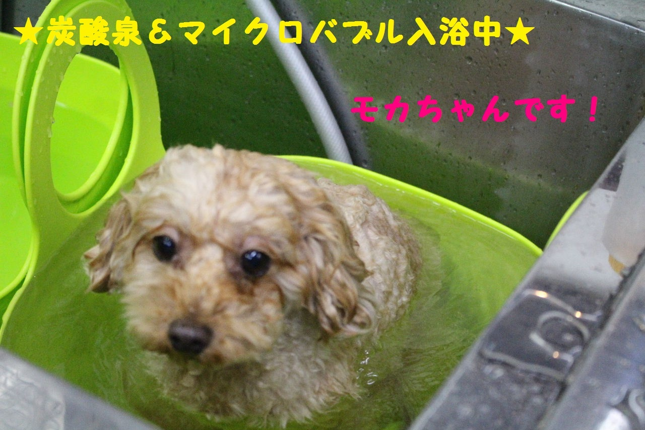今日の朝定~!_b0130018_07245398.jpg