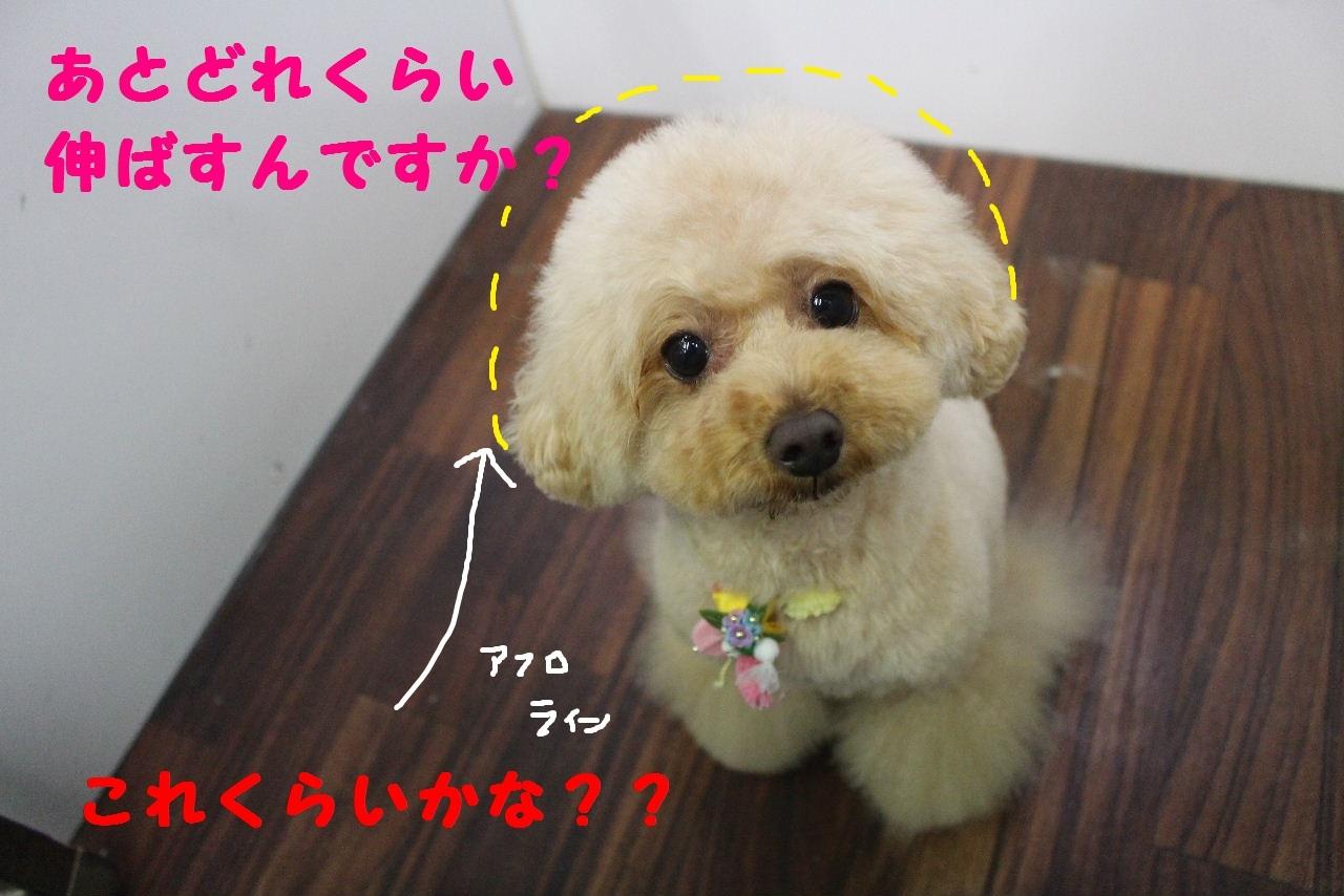 今日の朝定~!_b0130018_07252868.jpg