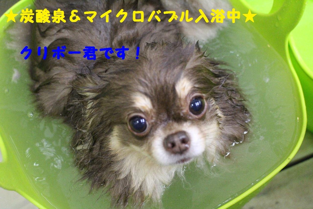 今日の朝定~!_b0130018_07270042.jpg