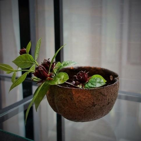 初夏の爽やかな陽射しに植物がとてもすてきに映える一日♫_b0232919_18571017.jpg