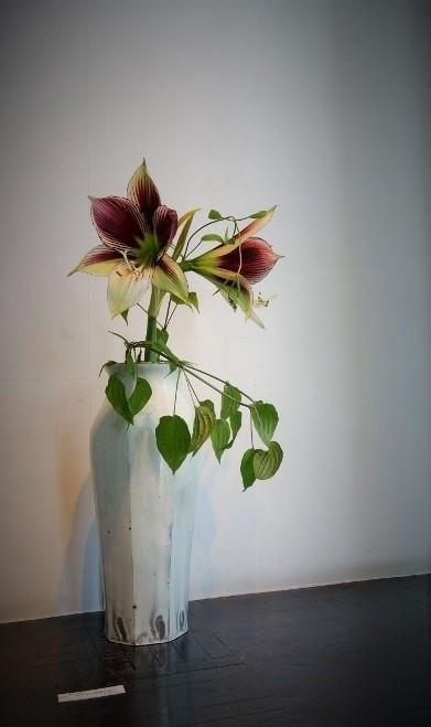 初夏の爽やかな陽射しに植物がとてもすてきに映える一日♫_b0232919_18593718.jpg