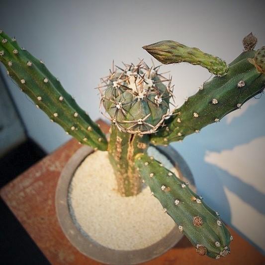 初夏の爽やかな陽射しに植物がとてもすてきに映える一日♫_b0232919_19055097.jpg