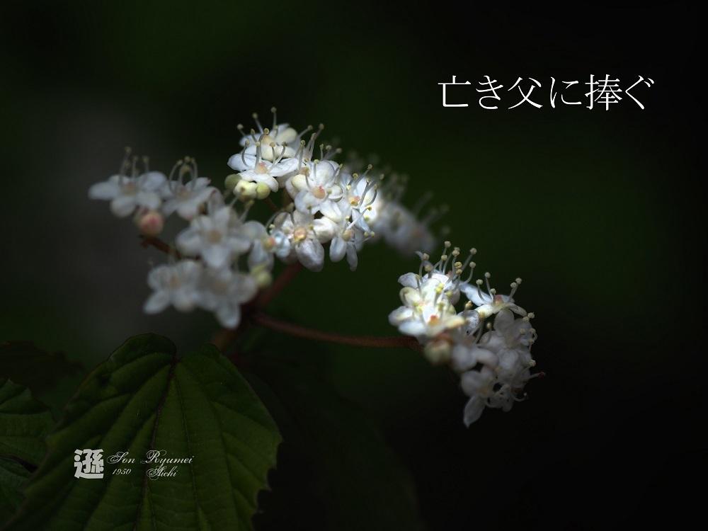 a0330864_06493609.jpg