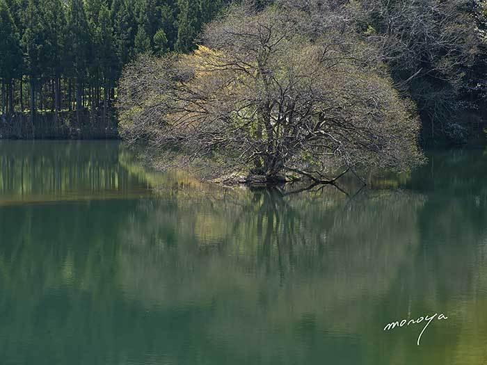 池の春_c0085877_07422476.jpg