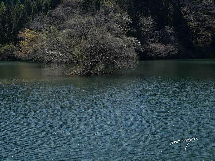 池の春_c0085877_07424683.jpg