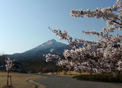 亀ヶ城公園の桜_a0096989_21003864.jpg