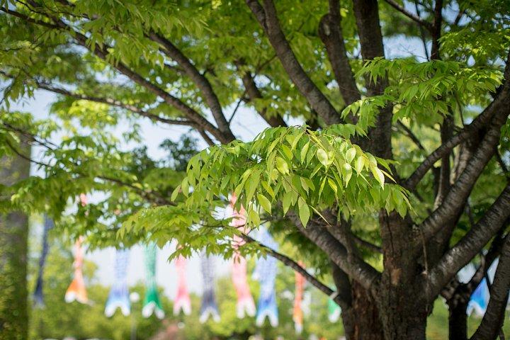 森のピクニックガーデン_d0353489_2159546.jpg