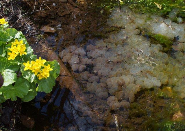 2017年4月28日(金) 春の花を探して(その7)旭川市~浦臼町_a0345007_10493245.jpg