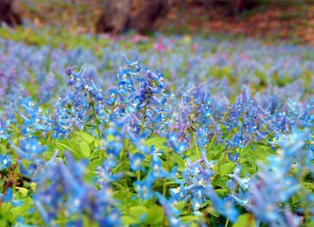 2017年4月28日(金) 春の花を探して(その7)旭川市~浦臼町_a0345007_11412084.jpg