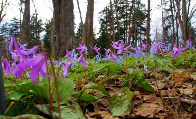 2017年4月28日(金) 春の花を探して(その7)旭川市~浦臼町_a0345007_11414916.jpg