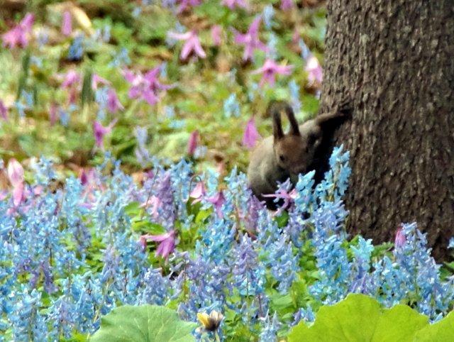2017年4月28日(金) 春の花を探して(その7)旭川市~浦臼町_a0345007_11423249.jpg