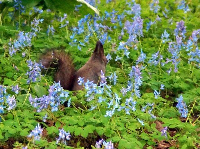 2017年4月28日(金) 春の花を探して(その7)旭川市~浦臼町_a0345007_1143056.jpg