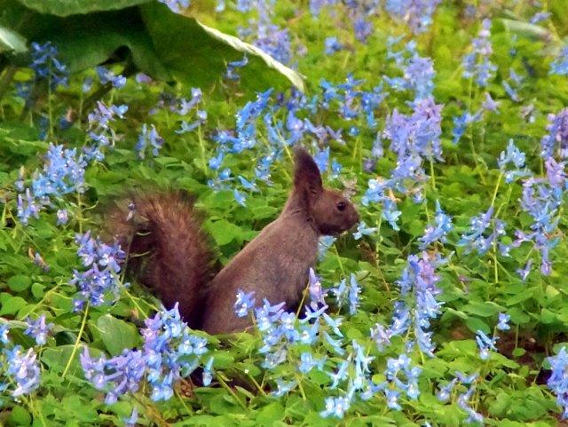 2017年4月28日(金) 春の花を探して(その7)旭川市~浦臼町_a0345007_11433547.jpg