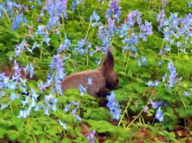 2017年4月28日(金) 春の花を探して(その7)旭川市~浦臼町_a0345007_1143585.jpg