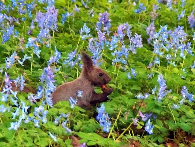 2017年4月28日(金) 春の花を探して(その7)旭川市~浦臼町_a0345007_11441490.jpg