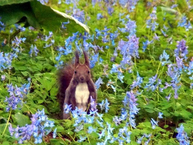 2017年4月28日(金) 春の花を探して(その7)旭川市~浦臼町_a0345007_11443433.jpg