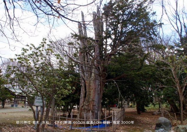 2017年5月1日(月)  「北海道の巨樹、巨木、名木」(第1回)_a0345007_14464498.jpg