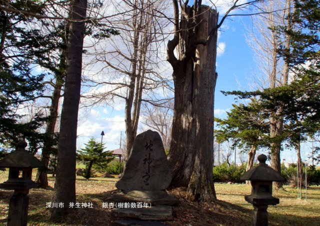 2017年5月1日(月)  「北海道の巨樹、巨木、名木」(第1回)_a0345007_14471439.jpg