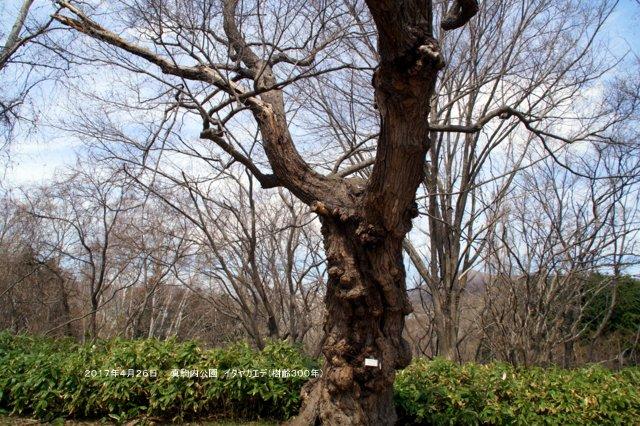 2017年5月1日(月)  「北海道の巨樹、巨木、名木」(第1回)_a0345007_14582757.jpg