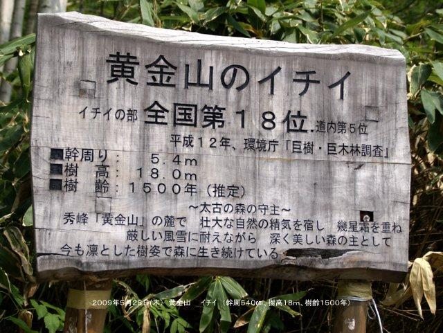 2017年5月1日(月)  「北海道の巨樹、巨木、名木」(第1回)_a0345007_16134741.jpg