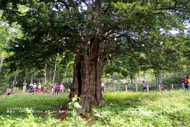 2017年5月1日(月)  「北海道の巨樹、巨木、名木」(第1回)_a0345007_161439.jpg