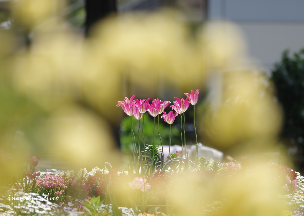 お出かけ先の花壇にて(^^)/_a0355908_13560369.jpg