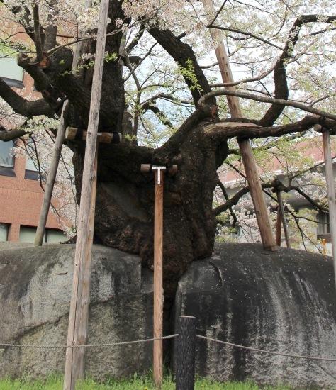 東北桜旅 〜岩手篇〜_f0197215_09061460.jpg