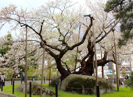 東北桜旅 〜岩手篇〜_f0197215_09062083.jpg
