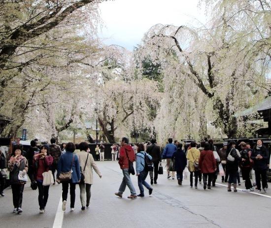 東北桜旅 〜秋田篇〜_f0197215_09445820.jpg