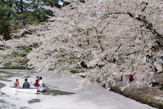 東北桜旅 〜青森篇〜_f0197215_13123345.jpg
