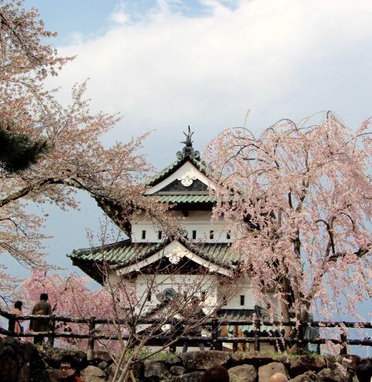 東北桜旅 〜青森篇〜_f0197215_13131479.jpg