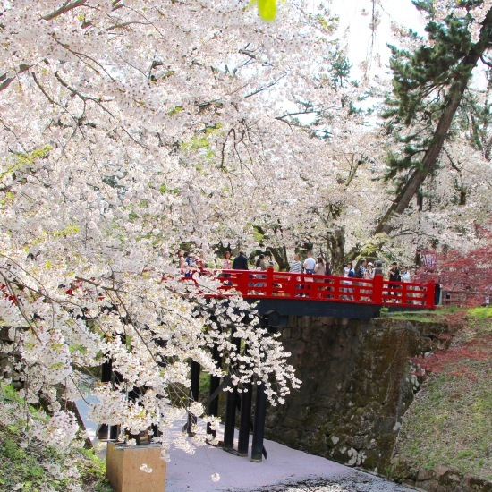 東北桜旅 〜青森篇〜_f0197215_13132416.jpg