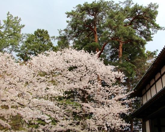 東北桜旅 〜青森篇〜_f0197215_13134652.jpg